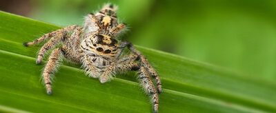 Keep Spiders Out Of You Tent 12 Tips That Work Glamping